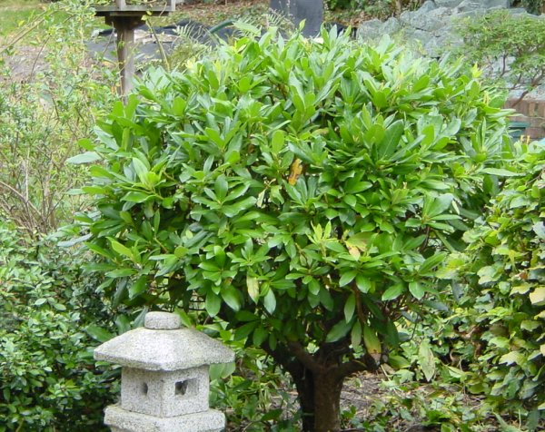 Build a japanese garden japanese garden plants for Japanese outdoor plants